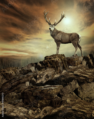 Fotobehang Hert deer in wildness_photo-manipulation