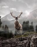 deer in wildness_photo-manipulation   - 191895731