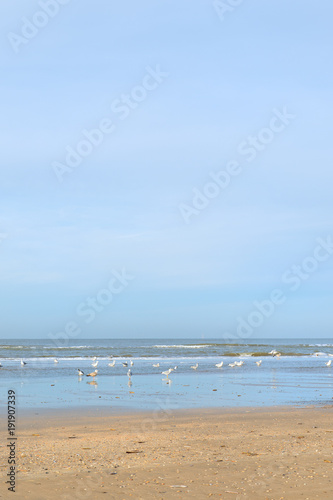 Tuinposter Blauwe hemel Dutch beach at North sea
