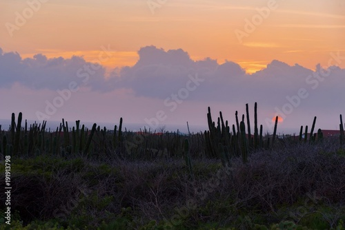 Plexiglas Lavendel cactus desert at sunset on the Caribbean island of Aruba Netherlands Antilles