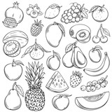 Vector sketch fruits