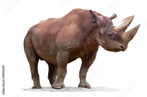 Fotobehang Neushoorn Animals
