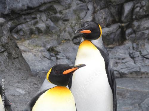 Fotobehang Antarctica 双子かな