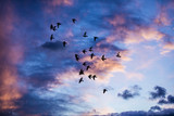 Silhouette of birds flying into the sunset clouds
