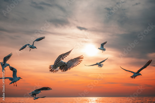 Seagull fly in the sky at sunrise