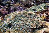 Tropical corals and reef in Bali. Diving in ocean.