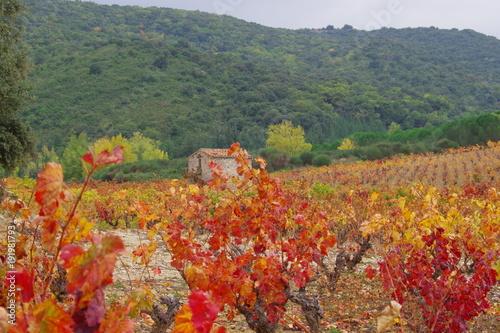 Fotobehang Khaki Cabane dans les vignes