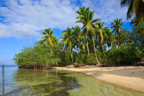 Papiers peints Tropical plage Caribbean sea and green palm trees.