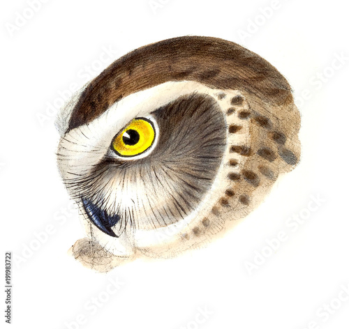 Foto op Plexiglas Uilen cartoon Illustration of bird