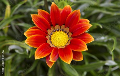 Fotobehang Natuur Красный тропический цветок.