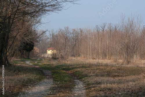 Fotobehang Cappuccino paesaggio di bosco in inverno