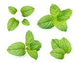 Mint leaves isolated on white background. - 191990999