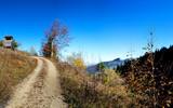 Wanderweg durch den Herbstwald auf den Bergen bei Pfronten im Allgäu in Bayern, Deutschland. - 191991514