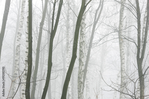 winter forest in thick fog