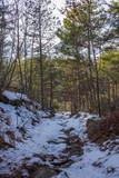 Bosco con neve