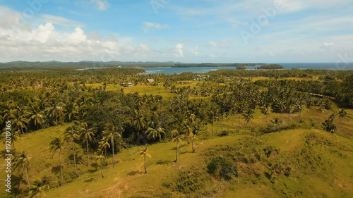 In de dag Rijstvelden Rice field with yellowish green grass, blue sky, cloud. Tropical landscape with palm trees and hills. Aerial view: rice plantation and hill. Philippines, Siargao.
