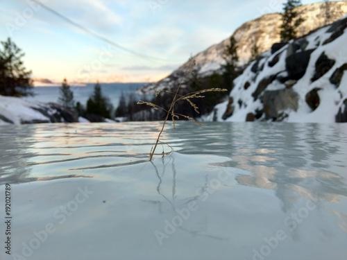 Foto op Canvas Donkergrijs Grass frozen in ice