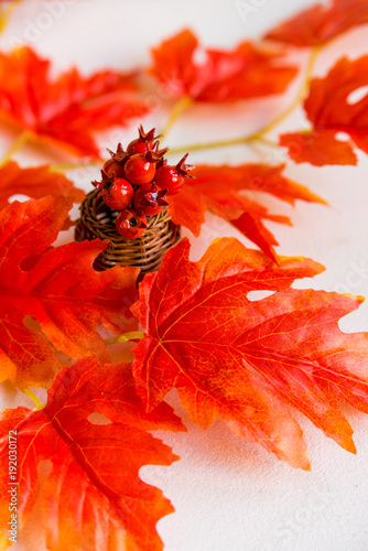 Hawthorn in vase and red maple leaves fall concept - 192030172