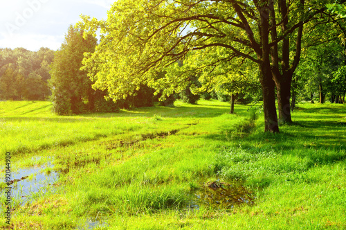 Deurstickers Lime groen Spring landscape. Green park trees and flooded spring lawn in the park in sunny weather
