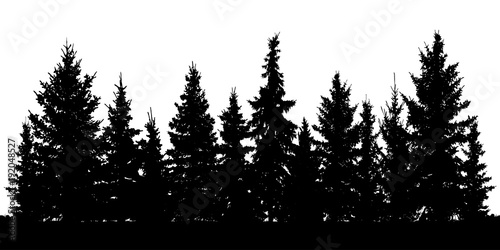 Forest of Christmas fir trees silhouette. Coniferous spruce. Vector on white background