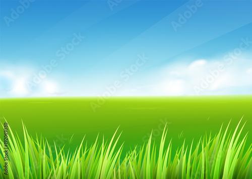 Plexiglas Boerderij Meadow field. Summer or spring nature background with green grass landscape
