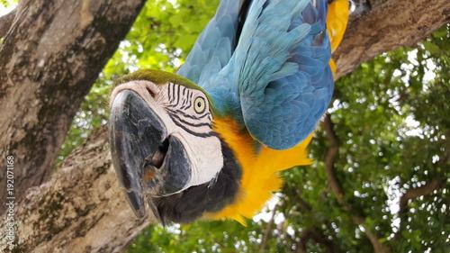 Fototapeta Papagei in Palme