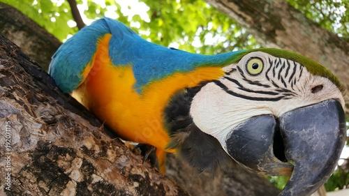 Schöner bunter Papagei in Palme