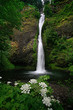 Horsetail falls and flowers in early  summer - 192071767