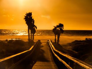 Sunset on the beach of Tarifa, costa de la luz, Spain, with palm trees