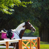 Paint horse with bridle and saddle against background of park. - 192074724