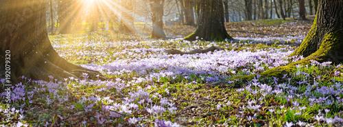 Wiese mit zarten Blumen im Frühling - 192079320