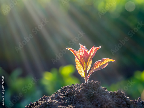 Young green sprout growing out from soil. New life and ecology concept