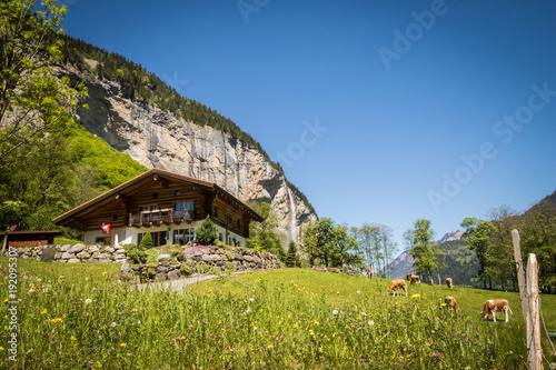 Fotobehang Pistache Staubbach Falls with Cows