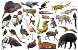 south america animals isolated - 192106333