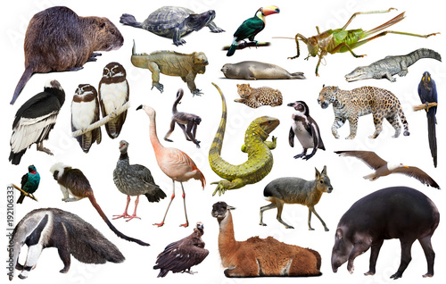 Fotobehang Aap south america animals isolated