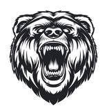 Vector Roaring Bear - 192122506