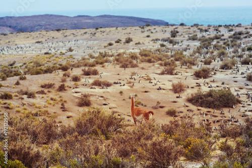 Fotobehang Galyna A. Argentina coast