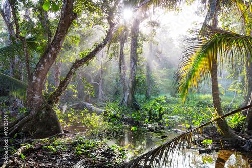 Fotobehang Galyna A. Jungle in Costa Rica