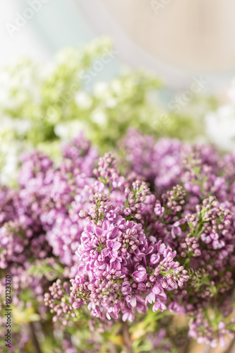 Spring violet lilac flowers, abstract soft floral background.