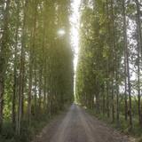 Tunnel tree row