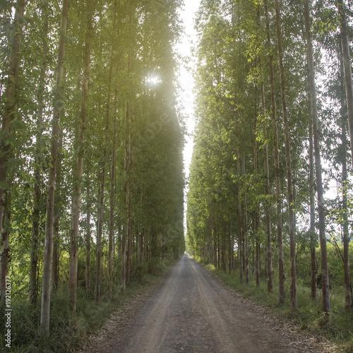 Wiersz drzewa tunelu