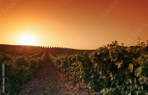 Fotobehang Landschappen vineyard in eastern plain of Corsica island