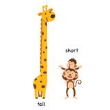 Opposite  tall and short vector illustration - 192132521