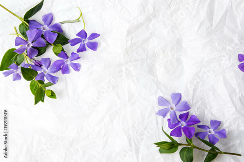 Purple lilac flowers on white fabric