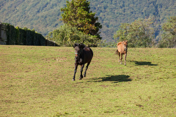 Free horses in the meadow