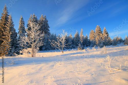 Fotobehang Zen Winter landscape on mountain, frozen pine forest, Bosnia and Herzegovina