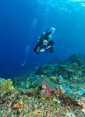 Young woman scuba diver exploring coral reef