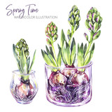 Watercolor illustration. Glass vases with hyacinth seedlings. Rustic objects and home decor. Spring collection in violet shades. ClipArt, DIY, scrapbooking elements. Holidays design. - 192151356