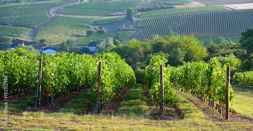 Panorama dans les vignes en France