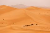 Camels caravan in Desert Sahara in Morocco, dunes in background - 192159342